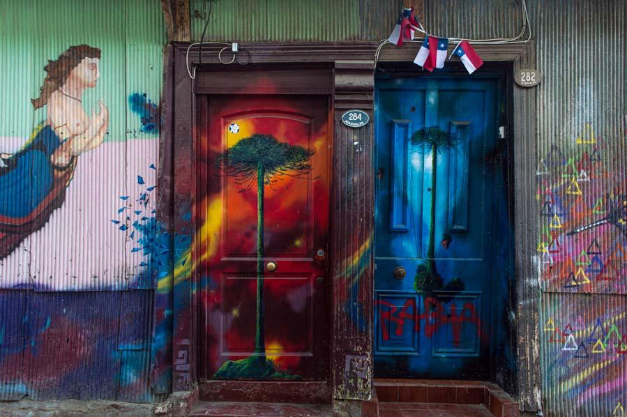 Araucarias en las puertas de la Minga de las Puertas Lúcidas.